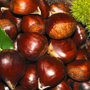 "1 1/4 - 1 1/2"" Diam. Large Colossal Fresh Chestnuts  (Priced by the Pound)"